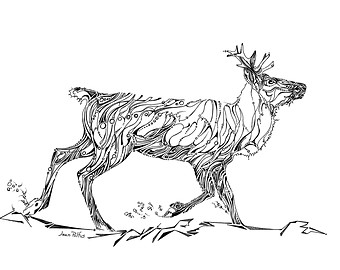 340x270 View Animal Line Drawings By Wildlinesstudio On Etsy