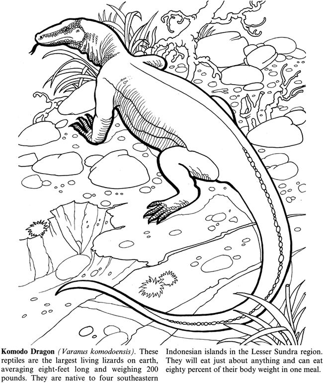 650x770 Welcome To Dover Publications Endangered Animals Kids Coloring