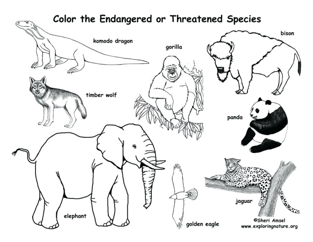 1024x791 Coloring Endangered Species Coloring Pages