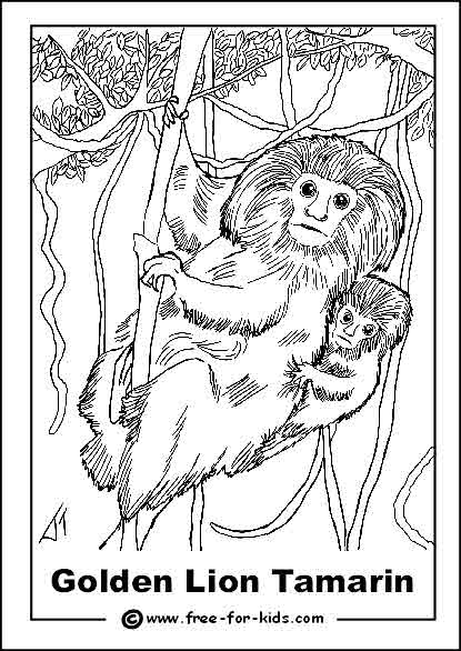 415x586 Endangered Animals Colouring Pages