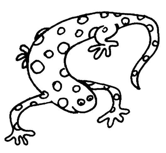 528x488 Endangered Species Coloring Pages Kids World