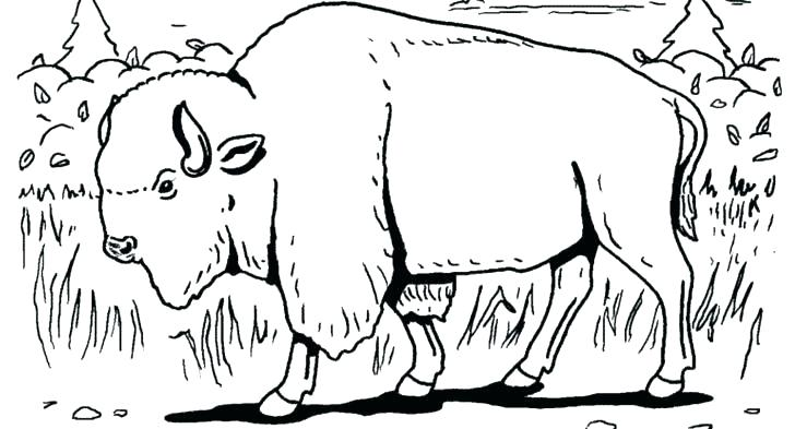 728x393 Endangered Species Coloring Pages Free Coloring Pages Free