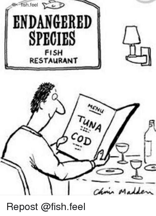 500x690 Fish Feel Endangered Species Fish Restaurant Menu Tuna Cod Ac