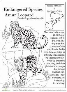 230x314 Sumatran Tiger Endangered Animal Poster Teaching Resources