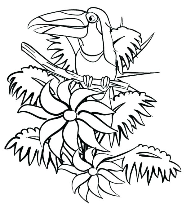 600x674 Top Rated Rainforest Coloring Pages Pictures Coloring Pages