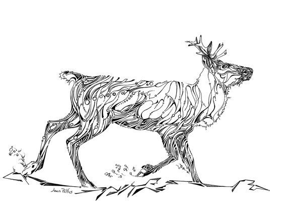 570x438 Woodland Caribou Drawing Caribou Illustration Black