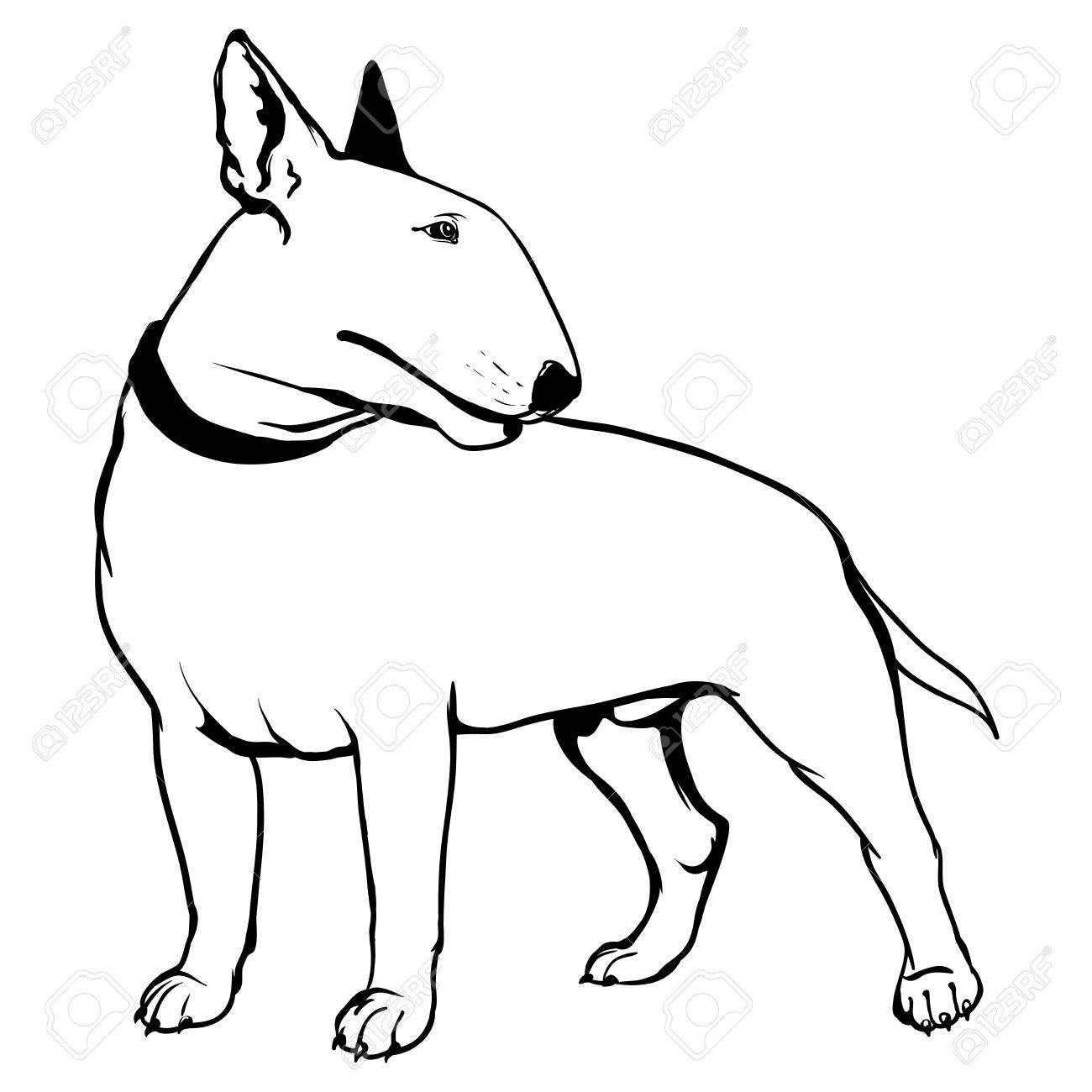 1300x1300 Bull Terrier Royalty Free Cliparts, Vectors, And Stock