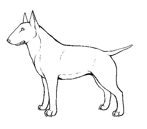 479x419 Bull Terrier