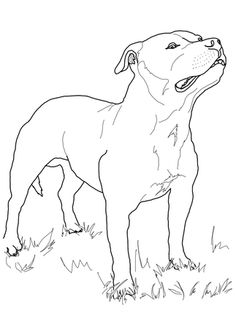236x314 Click Staffordshire Bull Terrier Colouring Page To View