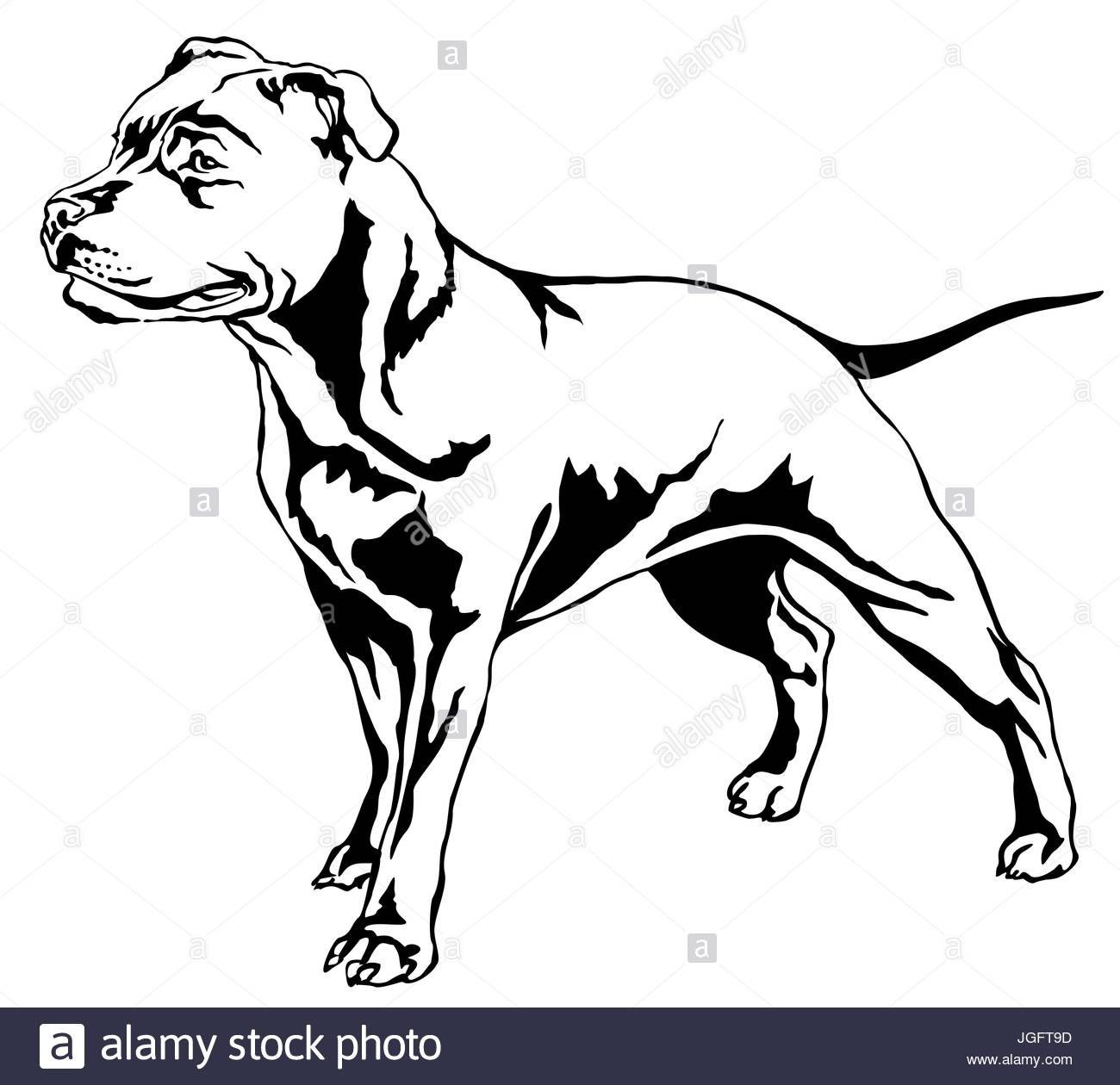 1300x1260 Decorative Portrait Of Standing In Profile Dog Staffordshire Bull