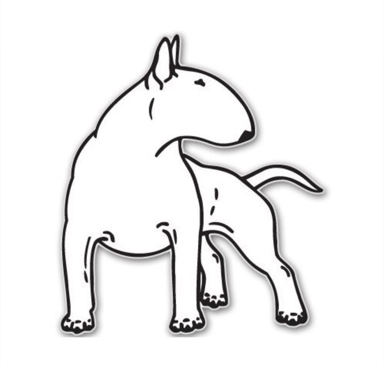1242x1188 English Bull Terrier Bull Terrier English Bull
