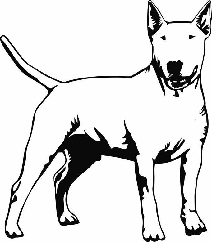 682x780 Standing Bull Terrier Printable Image Illustration Sketch