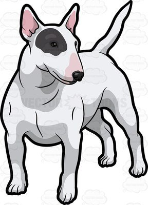 288x400 A White Bull Terrier A Black Patch Over One Eye