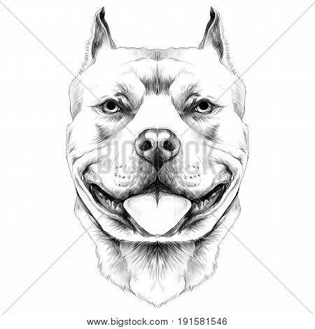450x470 Bull Drawing Images, Illustrations, Vectors