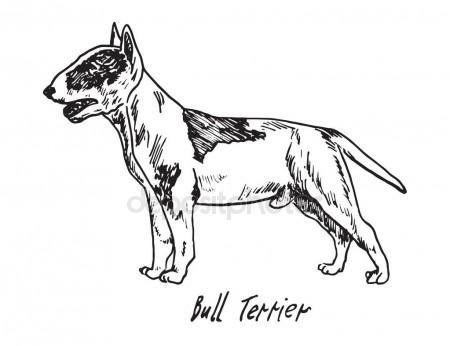 450x346 Bull Terrier, Hand Drawn Doodle Sketch Stock Vector