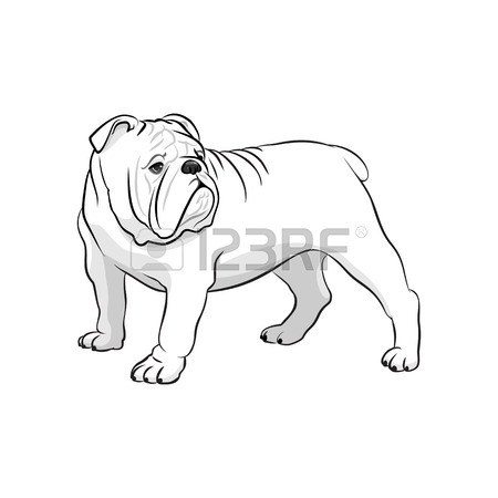 450x450 English Bulldog. French Bulldog. Dog On A White Background. Vector