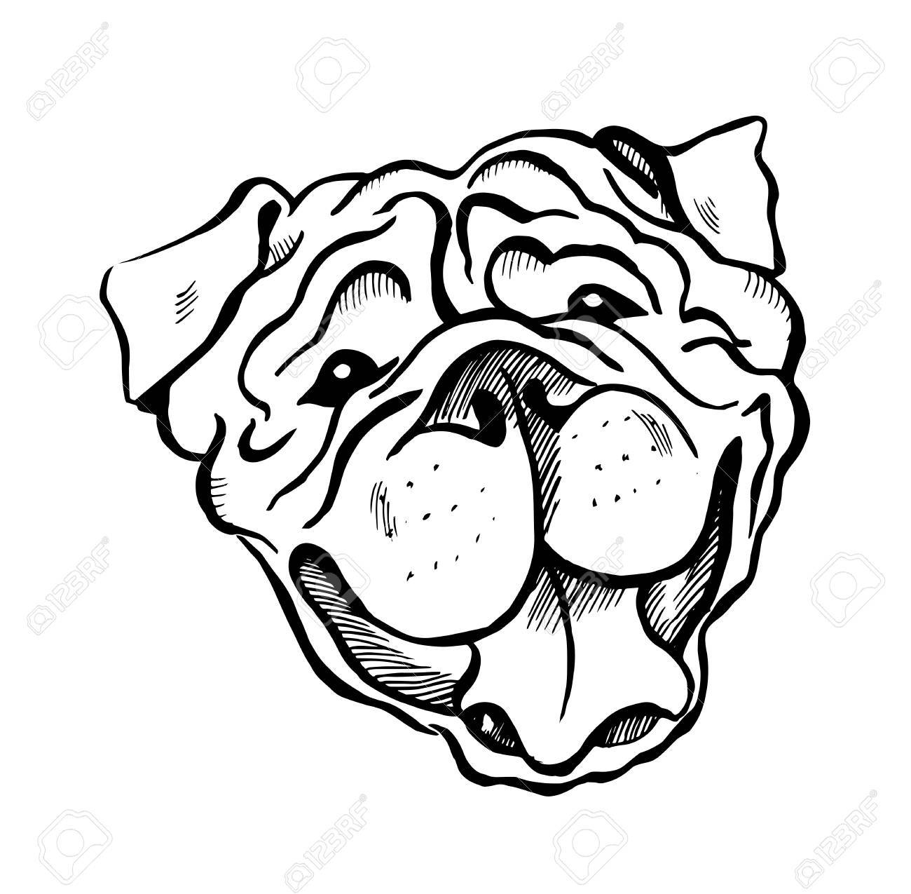 English Bulldog Drawing at GetDrawings.com | Free for personal use ...