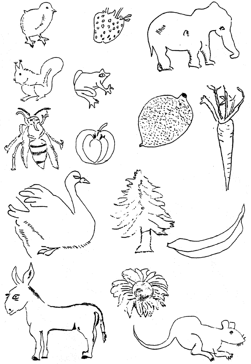 850x1234 Of Copy Drawings Made By Er For Living Things.