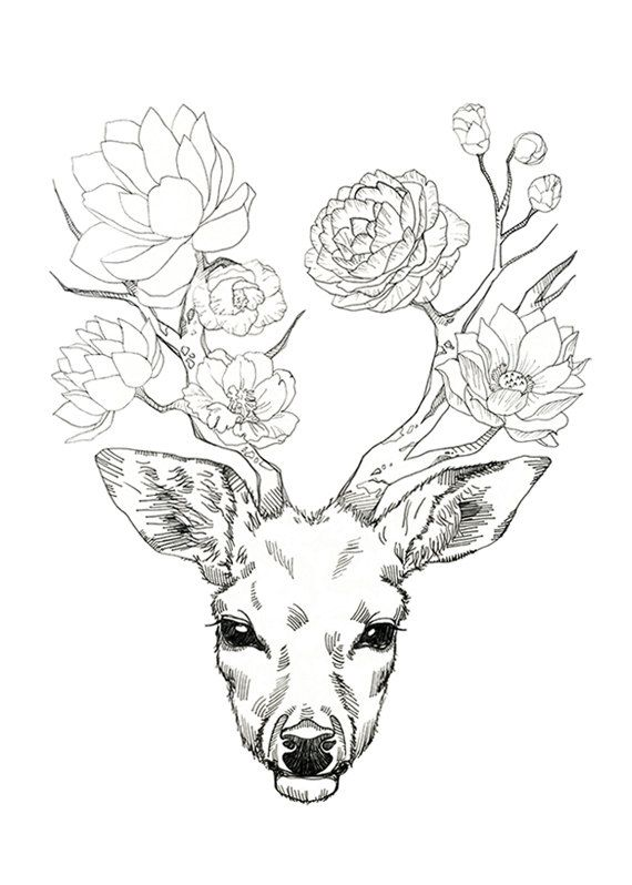 570x798 Dear, Deer Flower Drawings, Tattoo And Drawing Ideas