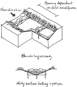 308x350 Gully Erosion. Drawing Illustrating Brush Layering Over A Gully
