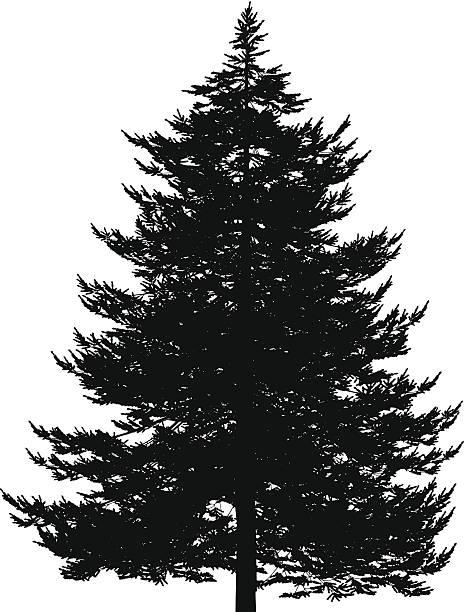 465x612 Evergreen Tree Clipart