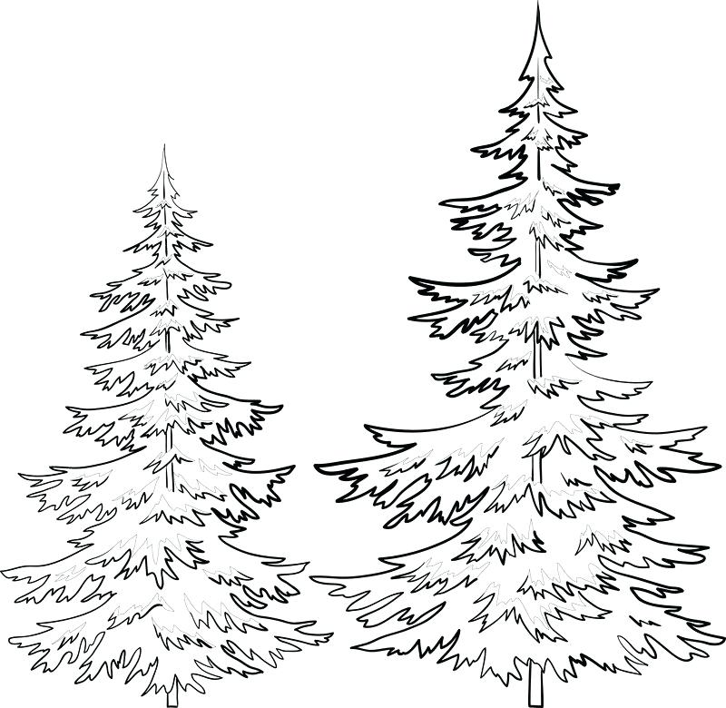 800x780 Evergreen Tree Outline Pin Drawn Fir Tree Line Drawing 1 Evergreen