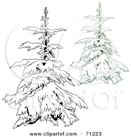 450x470 Royalty Free (Rf) Clipart Illustration Of An Evergreen Tree