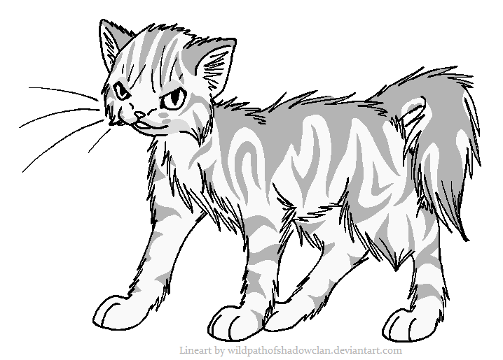 718x515 Evil Longhaired Tabby Lineart By Wildpathofshadowclan