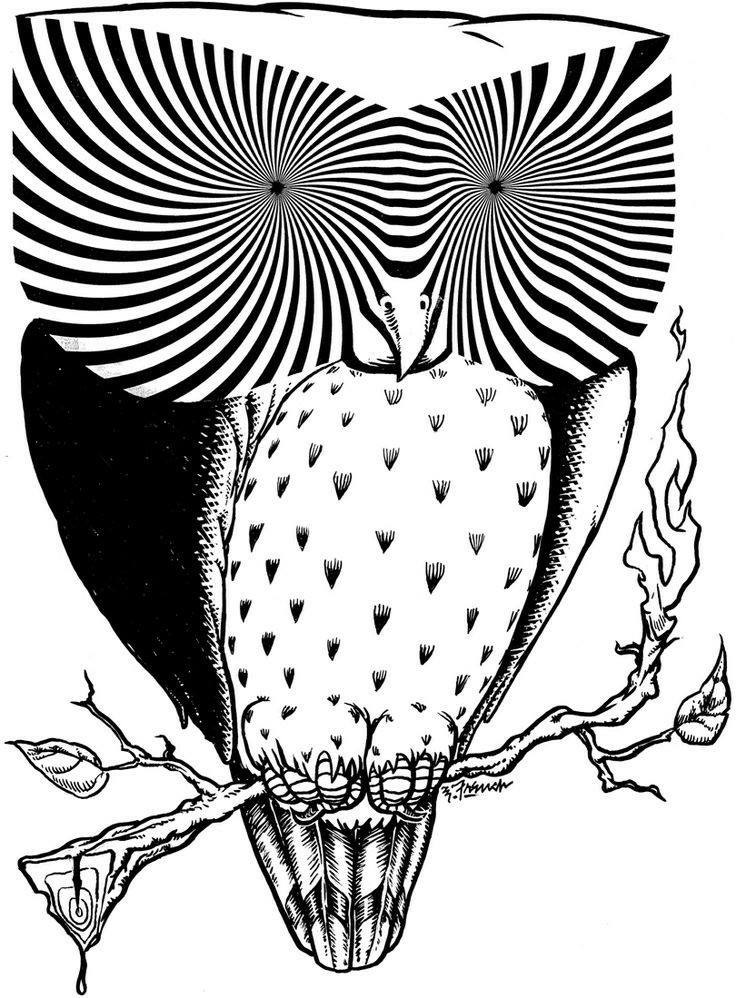 736x998 Pin By Glenda Settle On Owls Owl, Sketches And Draw