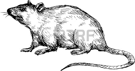 450x237 Rat Drawing Stock Photos. Royalty Free Business Images