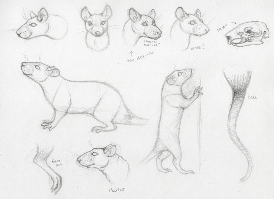 900x654 Drawing Rats Some Pointers By Deskleaves