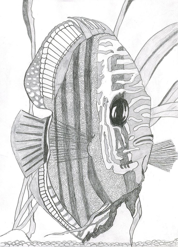 Exotic Fish Drawing