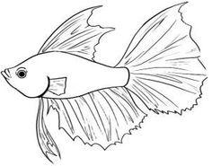 236x185 Draw A Koi Fish Koi, Fish And Draw