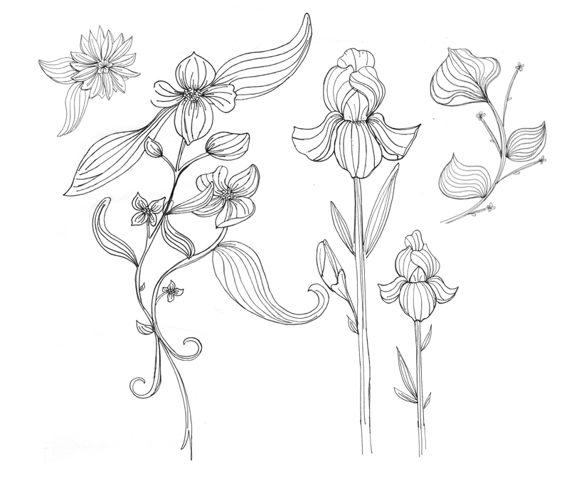Exotic Flower Drawing