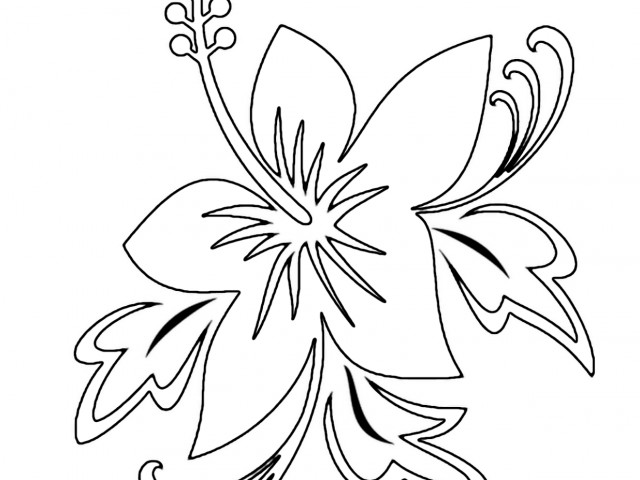 640x480 Exotic Flowers Coloring Pages Hawaiian Flower Coloring Pages