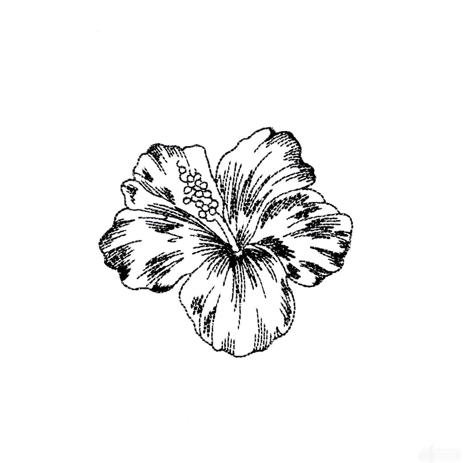 1500x1500 Tropical Flower Sketch Designs, Tropical Plant Drawings