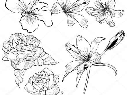 440x330 Tropical Flowers Tattoo Design Drawings, Tropical Plant Drawings