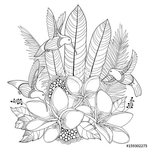 500x500 Vector Flying Hummingbird Or Colibri, Plumeria Flowers And Palm
