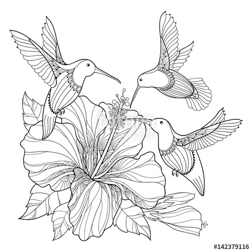 500x500 Vector Flying Hummingbird Or Colibri And Ornate Hibiscus