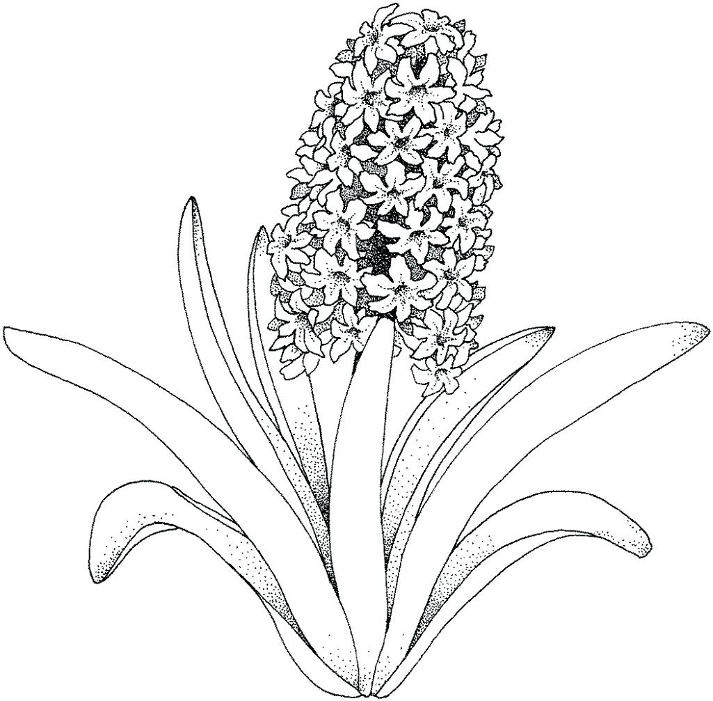 1025x1007 Coloring Tropical Flower Coloring Pages For Adults Only Of Exotic