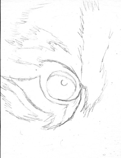 400x524 Drawing Realistic Tiger With Pencil Eyes