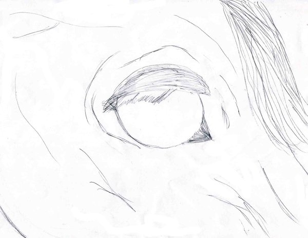 600x463 Horse Lineart Stock Eye By Aos2