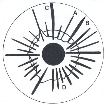 357x342 Iridologist