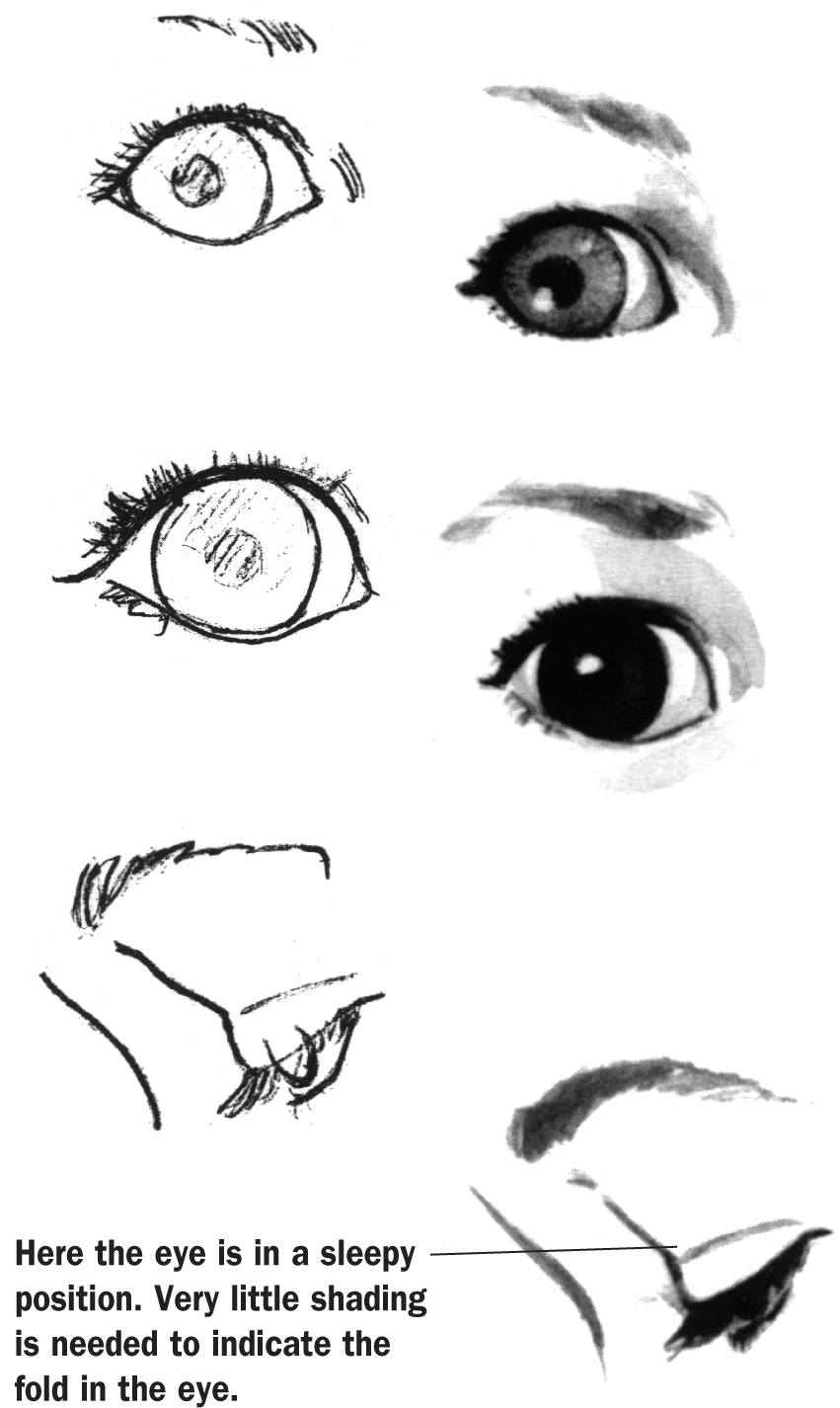 851x1426 Children's Eyes Are Generally Rounder Than An Adult'S, And