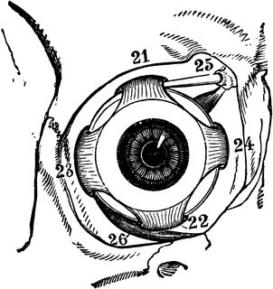 Eye Pupil Drawing