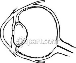 Eye simple drawing at getdrawings free for personal use eye 300x249 human eye diagram ccuart Gallery