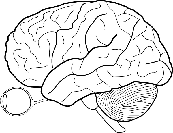 600x463 Human Brain Sketch With Eyes And Cerebrellum Clip Art Free Vector