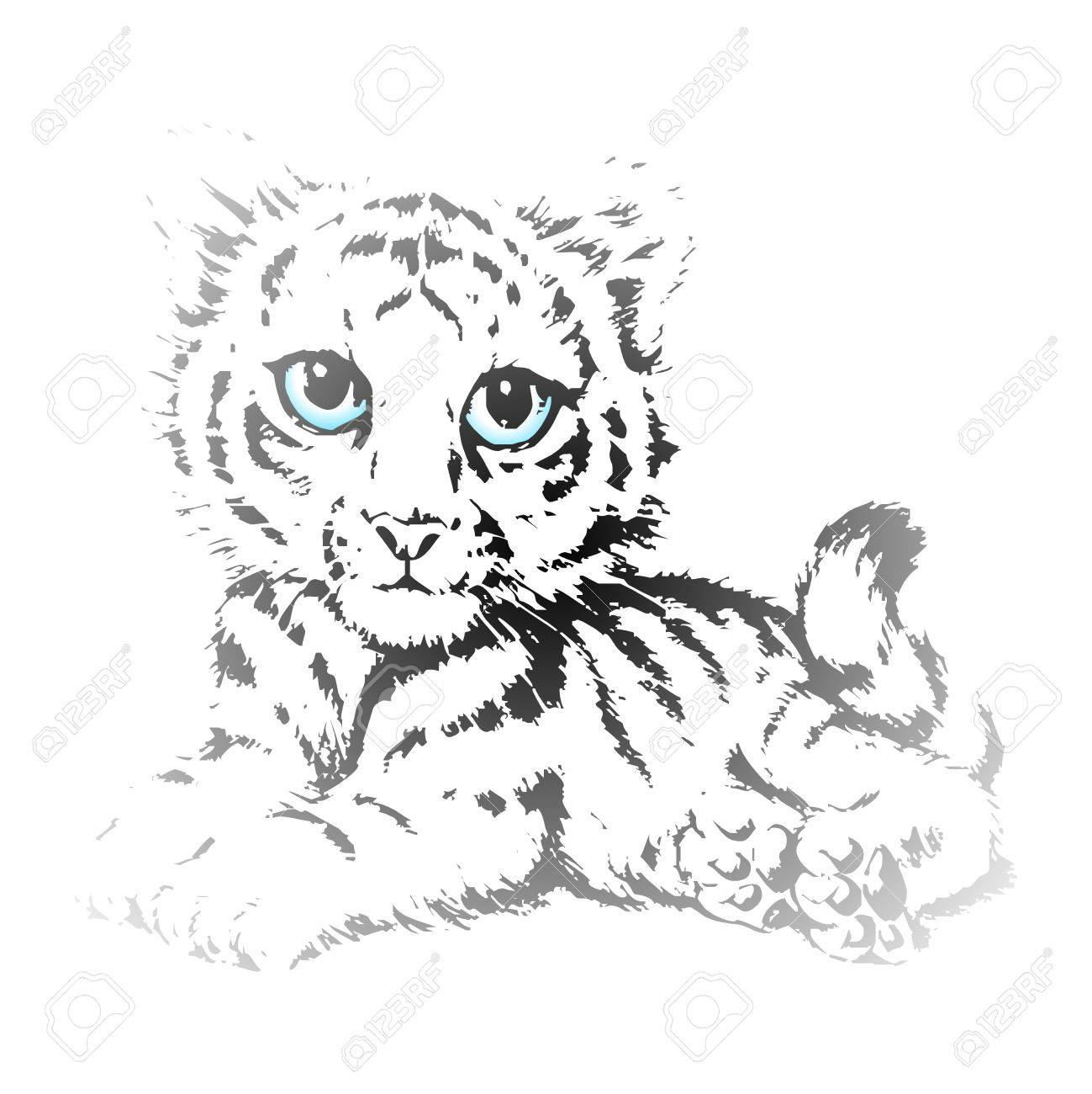 1299x1300 Vector Cute Tiger Cubs Pencil Sketch With Blue Eyes Royalty Free