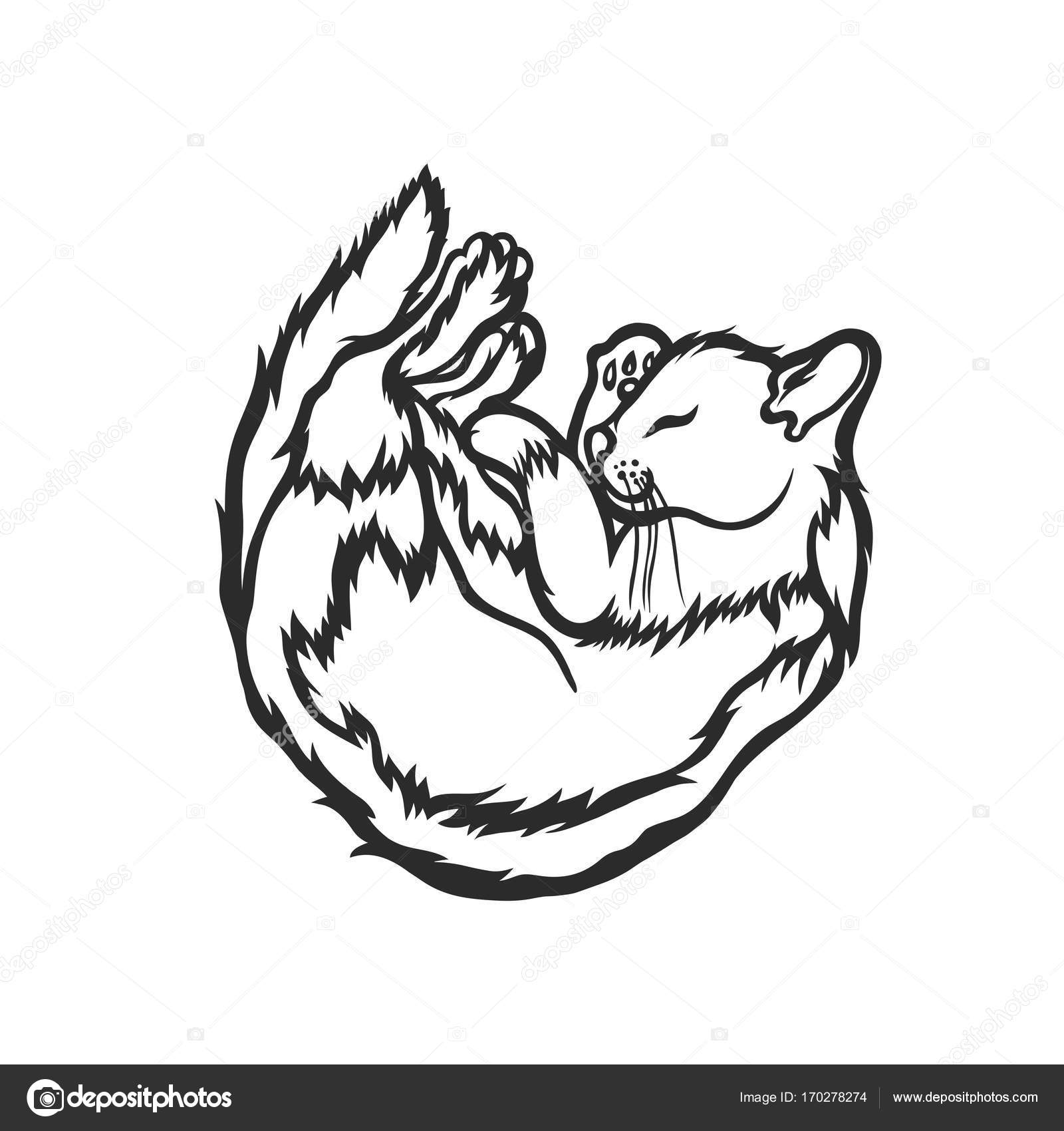 1600x1700 Sleeping Cat, Curled Up With His Eyes Closed. Sketch. Vector