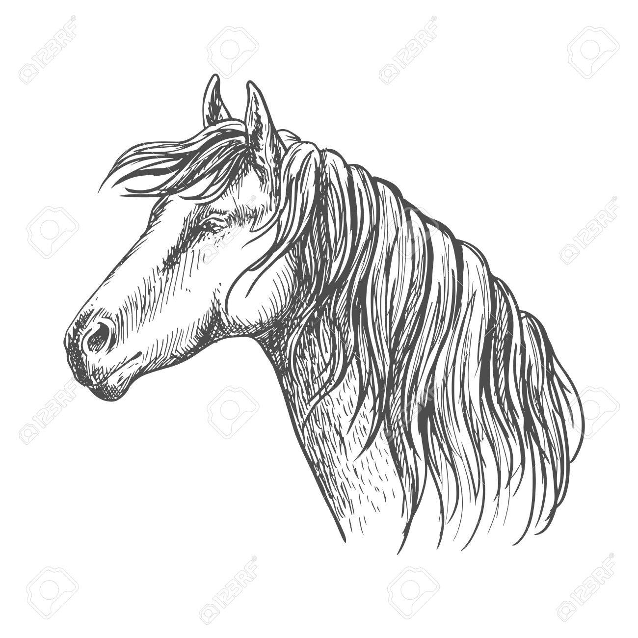 1300x1300 White Horse With Mane Along Neck. Mustang Stallion Sketch Portrait